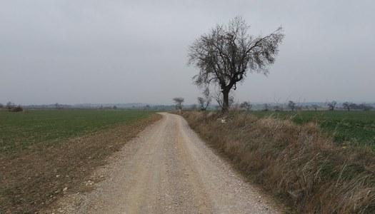 Finalització de les obres de reparació de camins del terme municipal de Guimerà, actuació finançada per la Diputació de Lleida